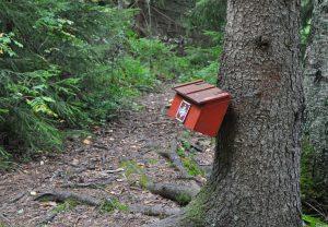 En träd och en postlåda på trädstam. En skogsstig.
