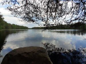 Fiskträsket ja veden pinnasta heijastuva mänty.